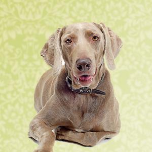Senior Honden - Proefpakketje op maat